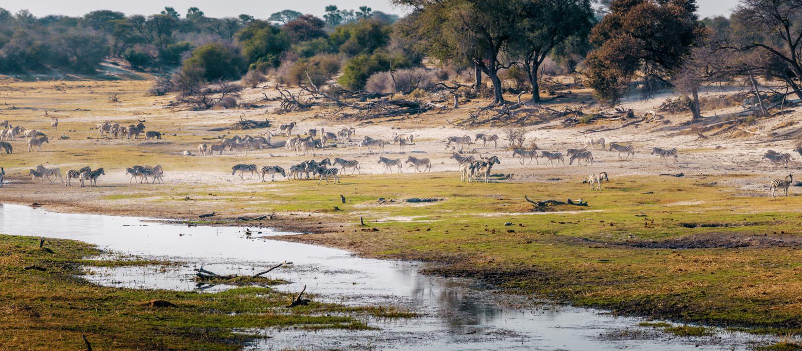Boteti River, Makgadikgadi National Park, Botswana, Africa