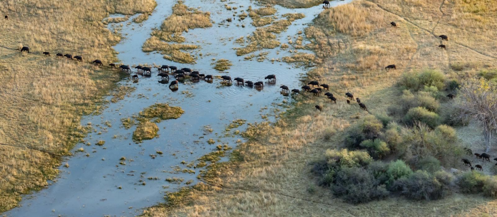 Vogelperspektive des Okavango-Deltas in Botswana, Afrika