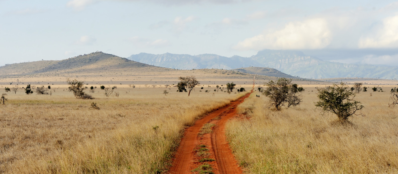 Savannah landscape in the National park in Kenya, Africa