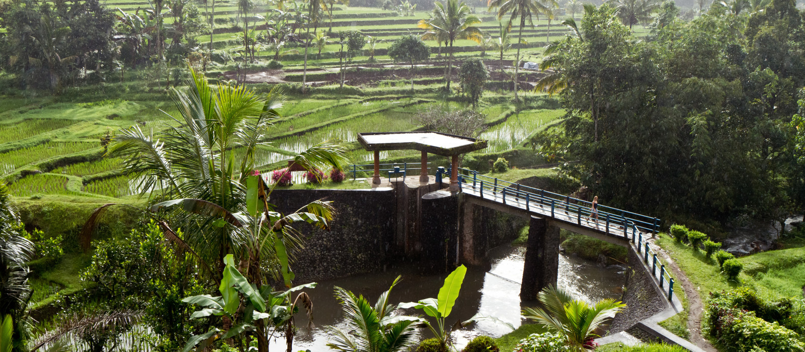 typical terrace rice fields of Bali, Indonesia, Asia