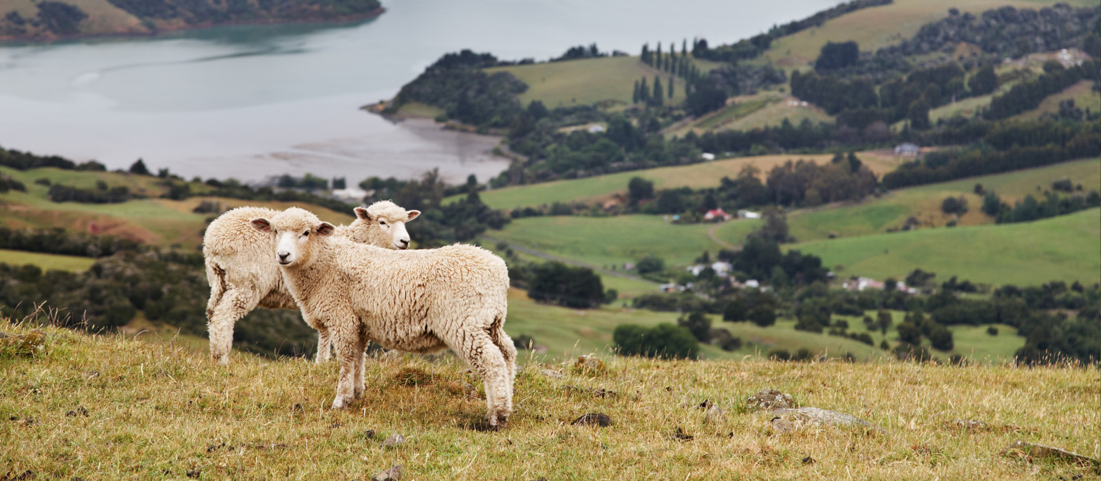 New Zealand landscape, Banks Peninsula