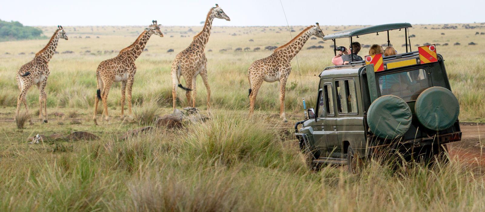Giraffes herd in savannah, Kenya, Africa