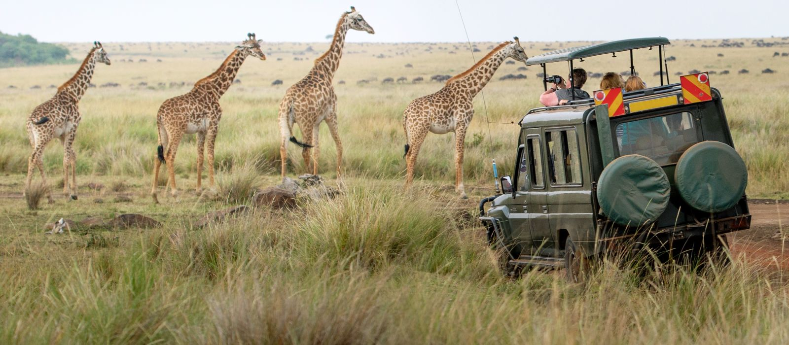 Giraffenherde in der Savanne, Kenia, Afrika