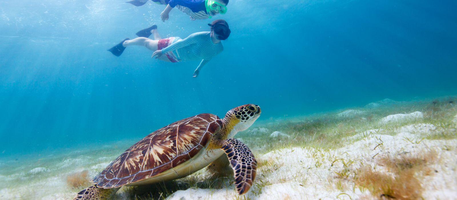 Unterwasseraufnahme einer Schildkröte und zweier tauchender Kinder vor den Galapagos-Inseln, Ecuador