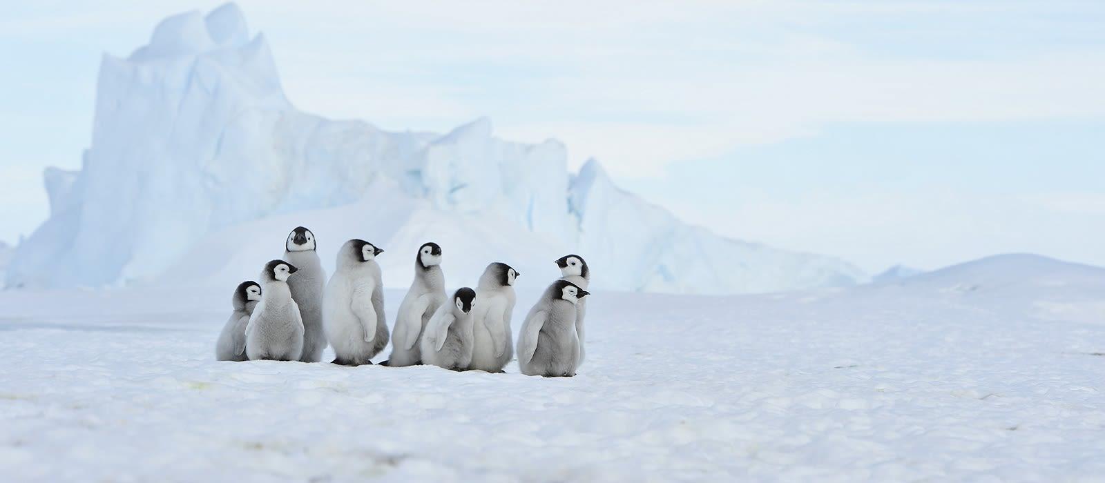 Beste Reisezeit Antarktis | Enchanting Travels