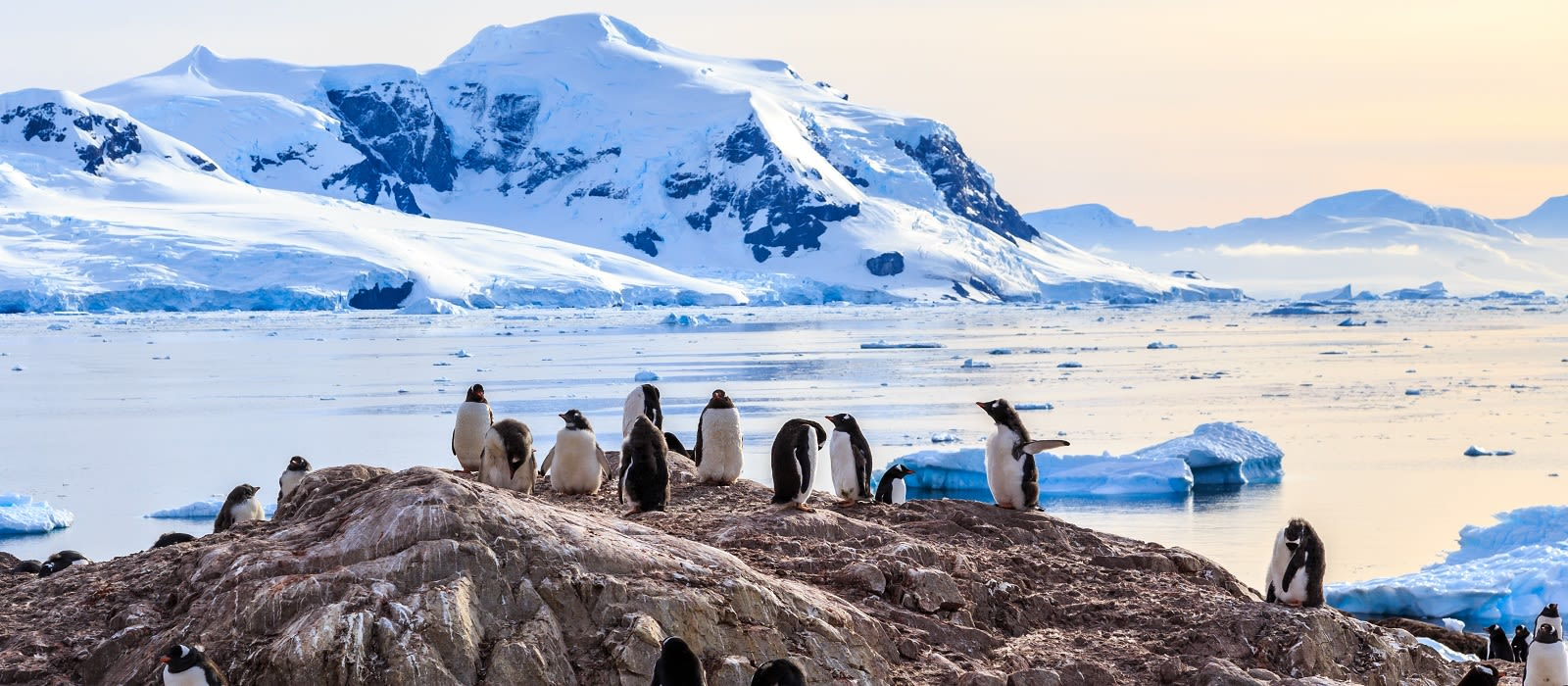 Enchanting Travels Antarctica Tours Rocky coastline overcrowded by gentoo pengins and glacier with icebergs in the background at Neco bay, Antarctic