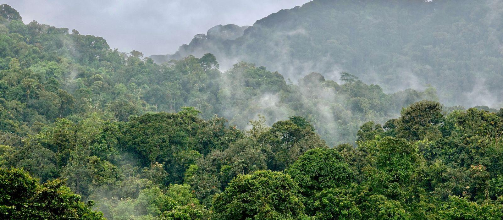 Rainforest Nyungwe, Rwanda, Africa, Landscape - Rwanda travel guide