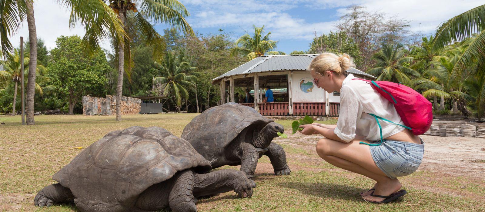 Seychelles safety - Female tourist woman feeding old Aldabra giant tortoises in National Marine Park on Curieuse island, Praslin, Seychelles, Africa