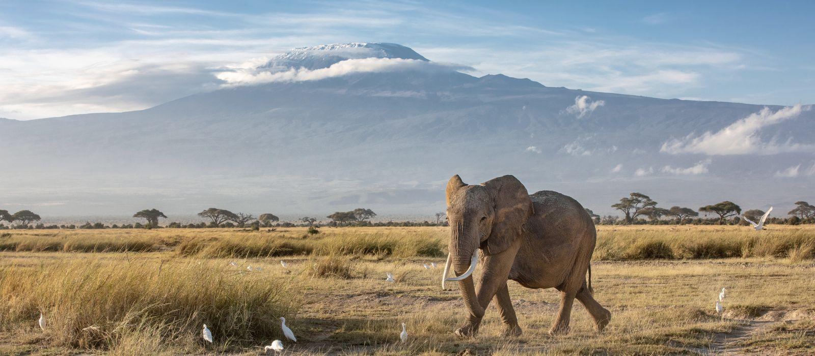 Afrikanische Elefanten, Kilimanjaro, Kenia, Afrika