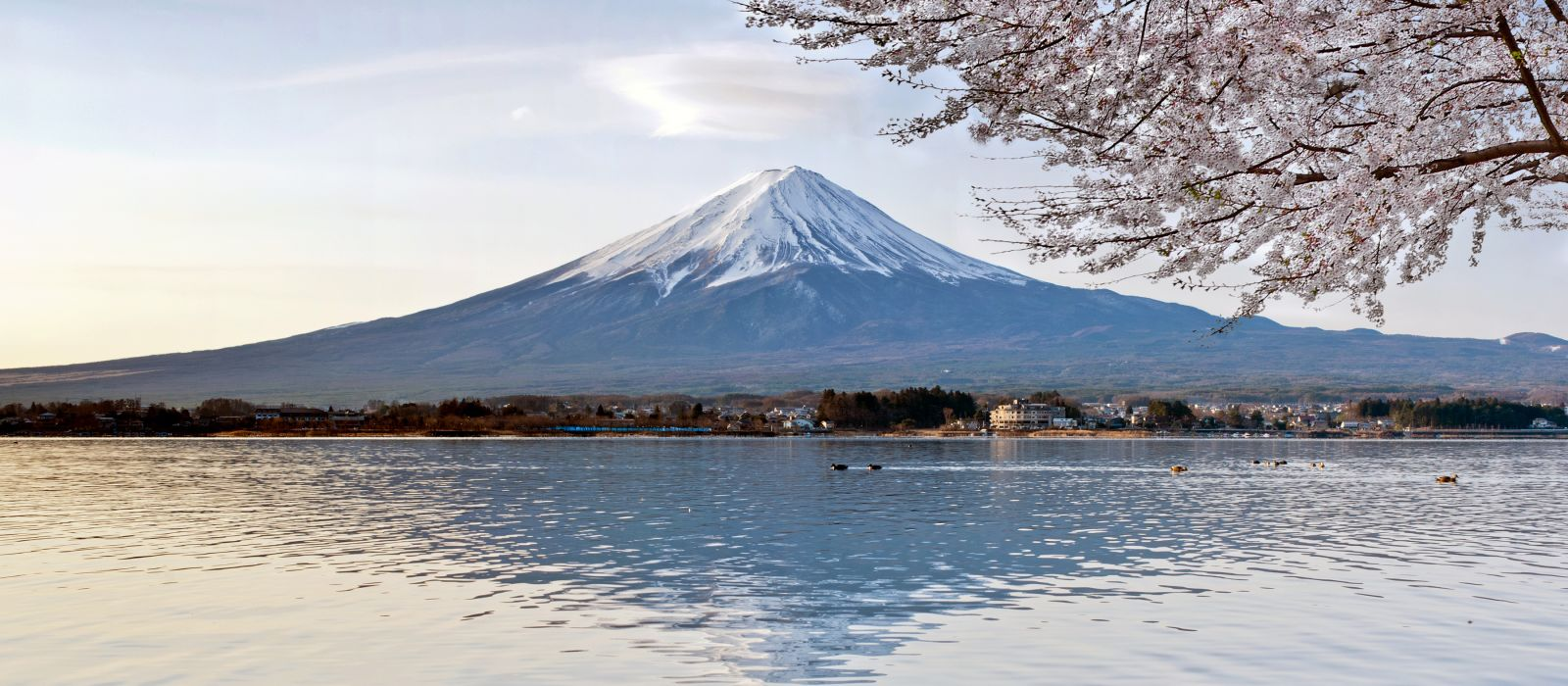 Cherry Blossom with Mt Fuji, Japan