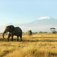 Elephants in the jungle, Africa safari