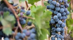 Die besten Weine auf Argentinien Rundreisen probieren Sie in Mendoza
