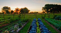 Vegetable garden at La Candelaria del Monte in Buenos Aires Provincia, Argentina