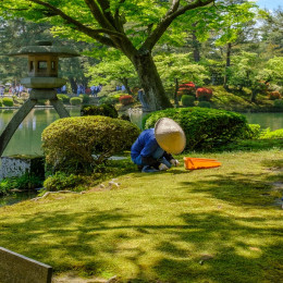 Enchanting Travels Japan Tours Kanazawa Japanese gardener near the Toro lantern in Kenrokuen, a japanese garden
