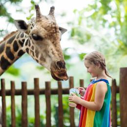 Enchanting Travels Asia Tours Singapore Tourism Children feed giraffes in tropical safari park
