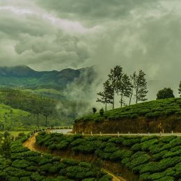 South India Tours Munnar Tea Plantation during Monsoon India Kerala
