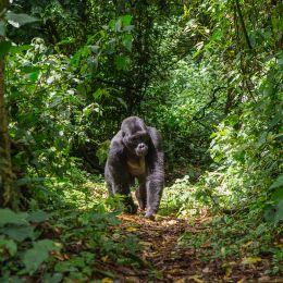 wildlife safari in Uganda