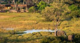 Elephants at Vumbura Plains in Okavango Delta, Botswana