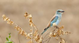 Vogelbeobachtungen in Tsavo East