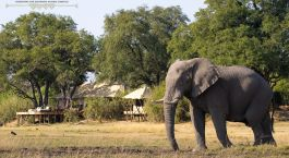 Elephants at Zarafa Camp in Okavango Delta, Botswana