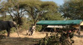 Safarizelte unter Bäumen im Mdonya Old River Camp in Ruaha, Tansania