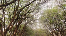Baumgesäumte Allee in der Hauptstadt Lilongwe