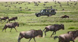 Große Tierwanderung in der Serengeti