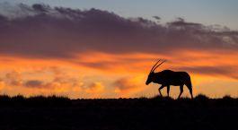 Sonnenuntergang in Sossusvlei, Namibia
