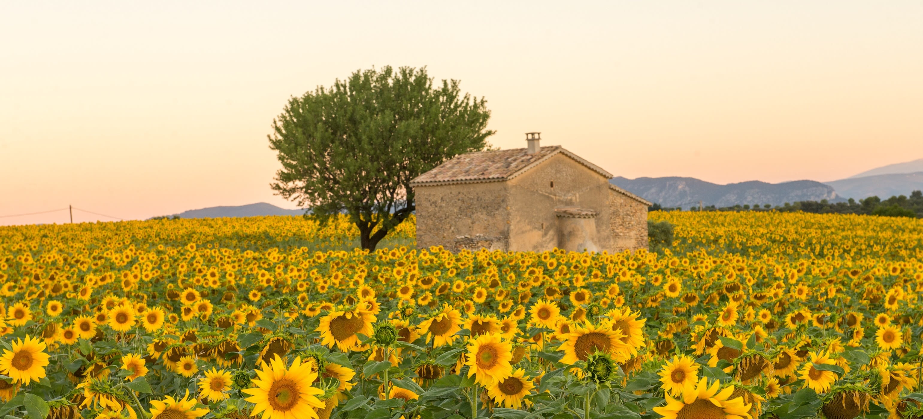 Enchanting Travels France Tours A field of sunflowers surround an old building in Provence, France - Best time to visit France