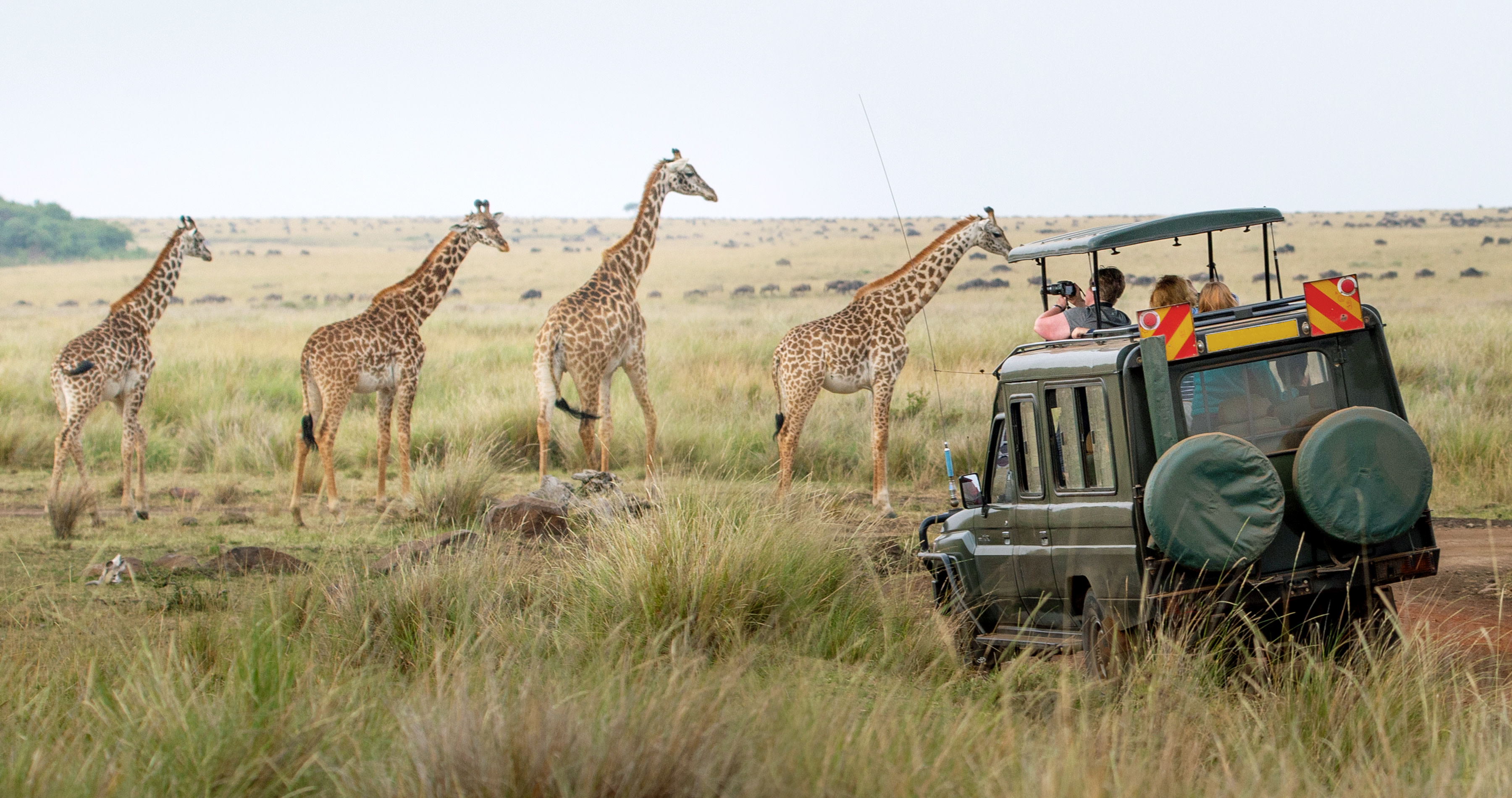 Kenya travel guide - Giraffes herd in savannah, Kenya, Africa