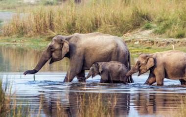 Indien Safaris im Jim Corbett Nationalpark: Elefanten passieren eine Wasserstelle