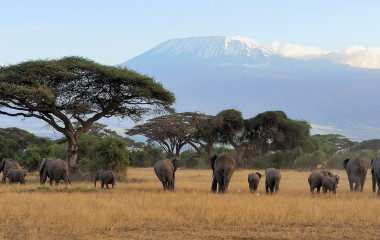 Elefantenherde in der Savanne vor dem Kilimandscharo in Tansania, Afrika
