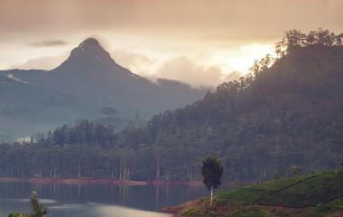 Teehügel in Sri Lanka