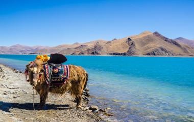 Tibet: Yamdrok Lake