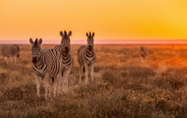 Enchanitng Travels - Namibia Tours - Guest Image - Silvia Knecht