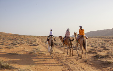 Walking with camels in desert of oman
