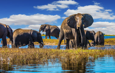 Enchanting Travels Botswana Tours Chobe National Park