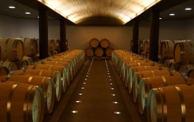 Barrels of red wine, Colchagua, Chile, South America