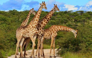 Erleben Sie ungezähmte Wildnis auf Ihrer Safarireise