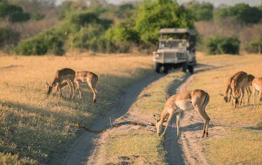 Game Safari, Deer, Malawi, Africa