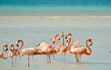 Enchanting Travels Central America Tours Mexico Flamingos on Isla Holbox, México