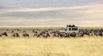 Great Migration in Tansania - Top Ten Things to do in Africa