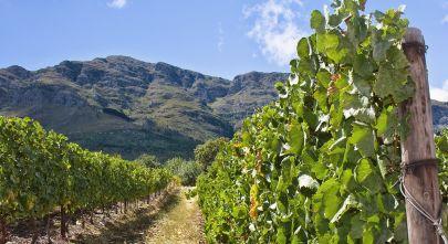 Südafrika Rundreisen: Die Winelands sind ein Traum für Feinschmecker