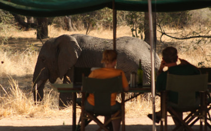 Elephant view from the tent in Tanzania