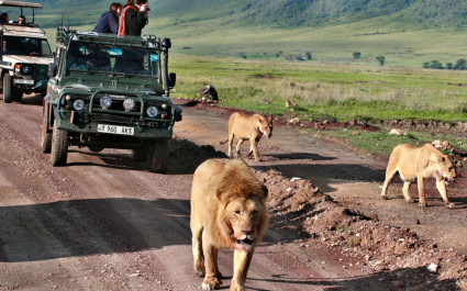 Big Five am Ngorongoro Krater