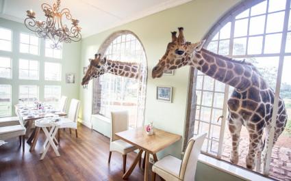 Giraffe Manor in Nairobi