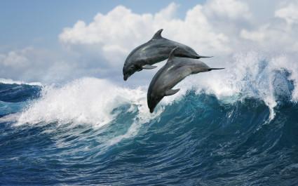Enchanting Travel Hawaii Tours Dolphin