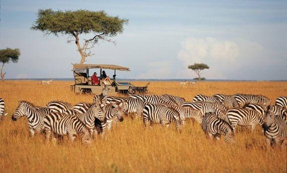 Touristen auf Safari beobachten die Tierwanderung der Zebras