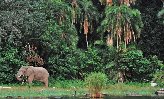 Gründung des Rubondo Nationalparks