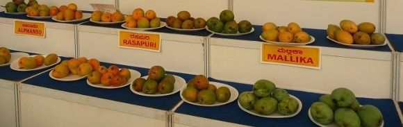 Visit Delhi For A Mango-Filled Summer